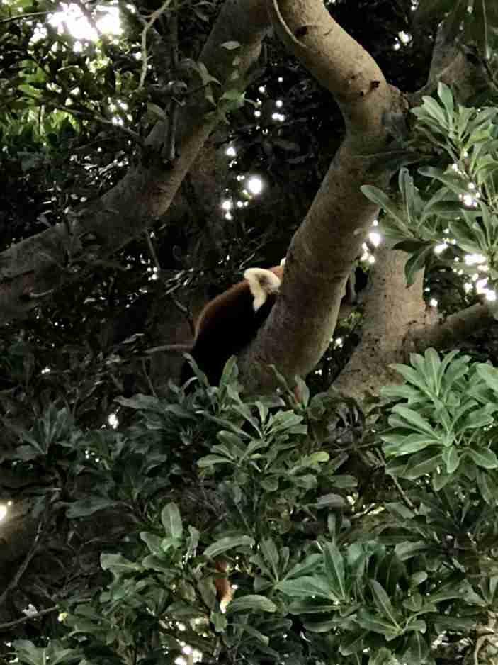 木の上で寝る_R