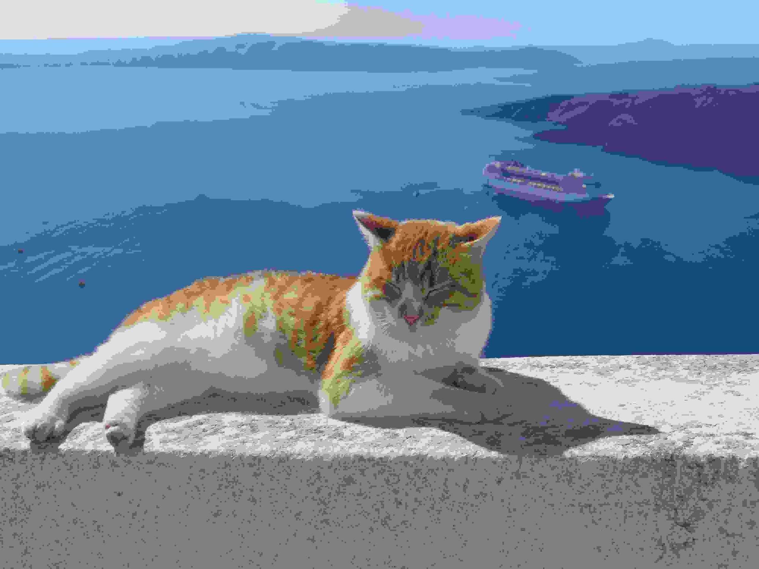 海辺でのんびり猫_R
